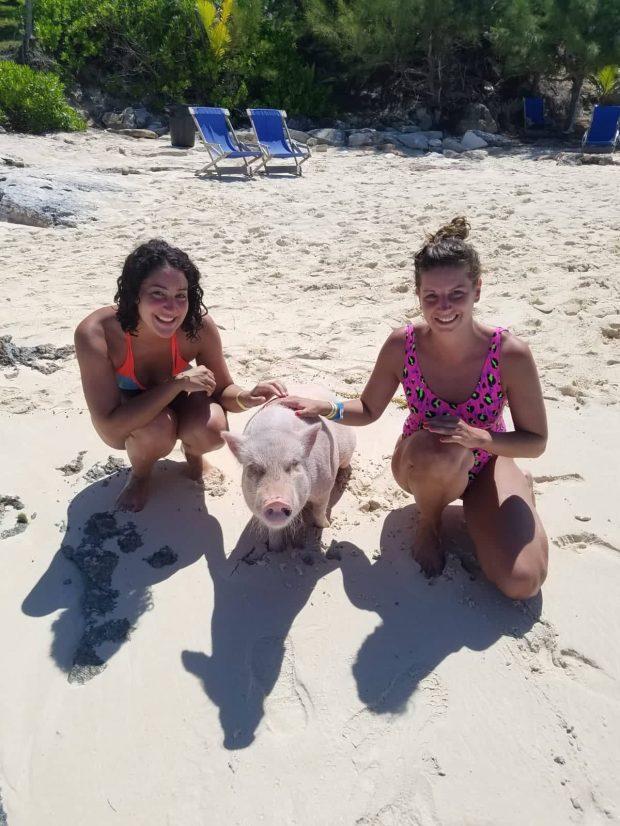 Schweine Bahamas.jpg